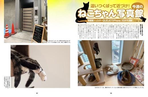 保護猫シェルターQUEUEでiPhone XSが大活躍!/今週のねこちゃん写真館