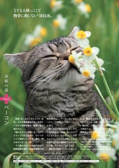 表紙の猫 ベーコン
