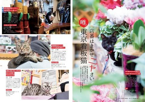 東京看板猫