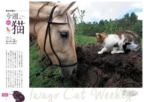 ●岩合光昭の今週の猫