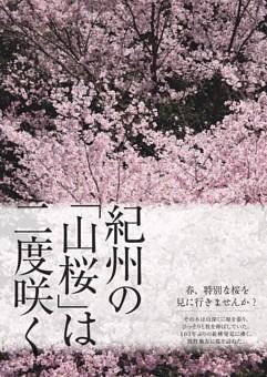 紀州の「山桜」は二度咲く