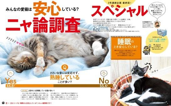 みんなの愛猫は安心している?ニャ論調査スペシャル