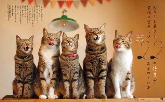 2月22日 猫の日specialあなたと暮らす愛猫の世界には22の好きがあふれている