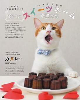 なぜか日本に多い!?甘〜い スイーツネームの猫たち