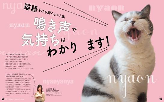 猫語をひも解くヒント集 鳴き声で気持ちはわかります!