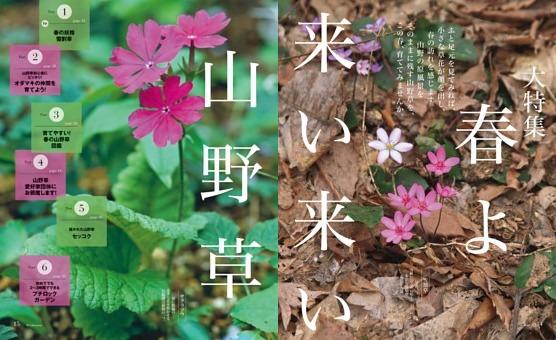 [特集] 春よ来い来い 山野草